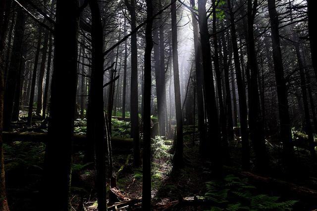 via Flickr user forestwander-nature-pictures 7553674988